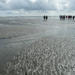 mudflat-hiking-57659_1280